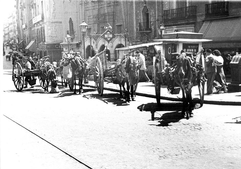 Grupo de carros arrastrados por un mulo, a la espera de carga para el transporte mientras los animales comen el pienso en su bozal-fardel. - (Archivo Basilio Martín Patino).